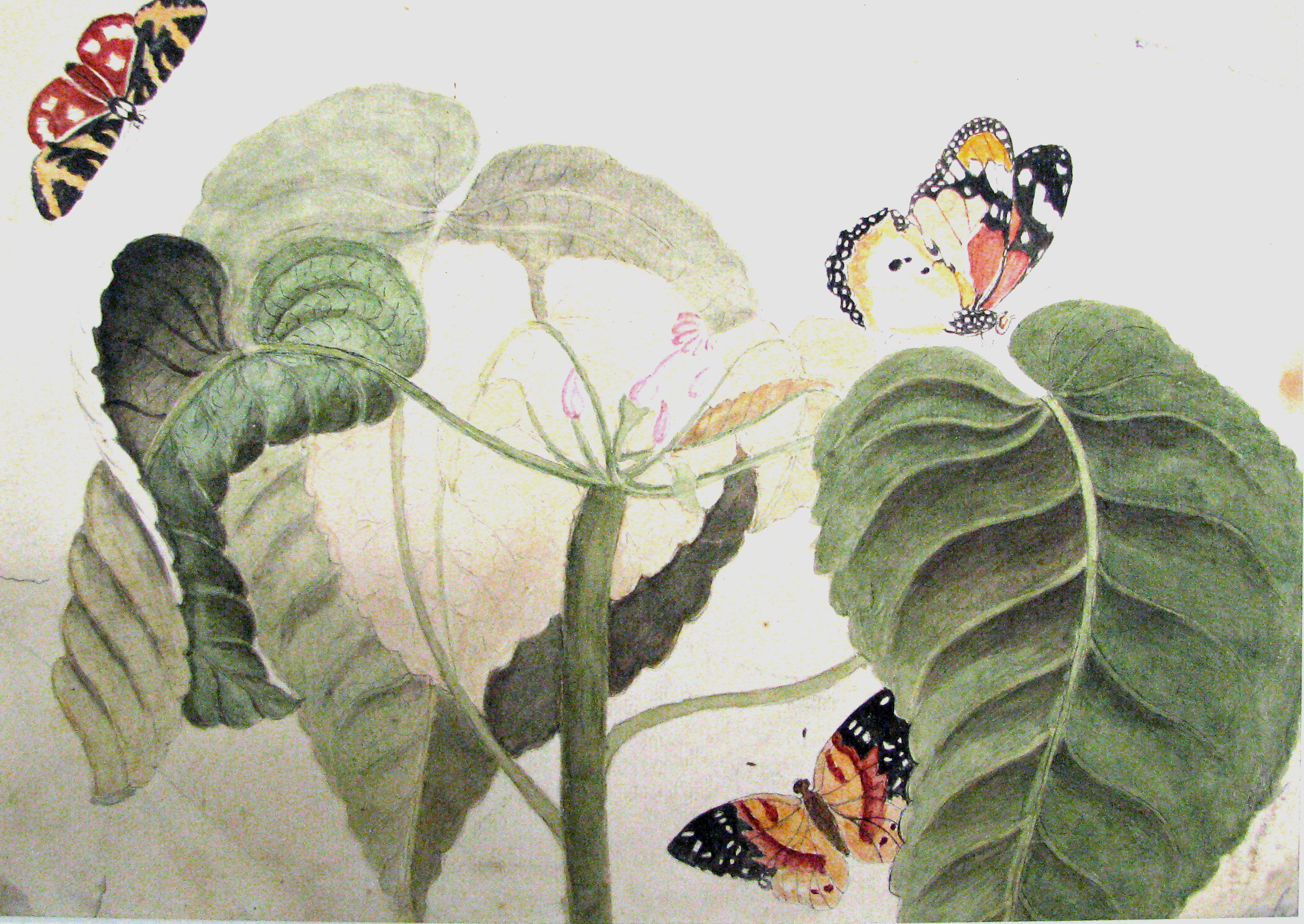 a%20watercolour%20drawing%20of%20%22Colour%20Study-Butterflies%22%20attributed%20to%20Margaret%20or%20Catherine%20Reynolds